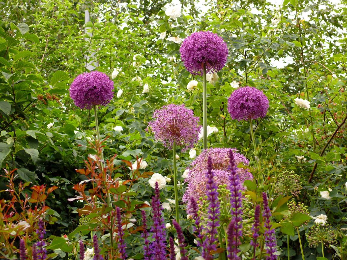 Pflanzen-Garten-Gestaltung - Gartengestaltung-Gartenbau-Reischl ...